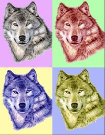 Wolf, Popart, Wolves, Tiere