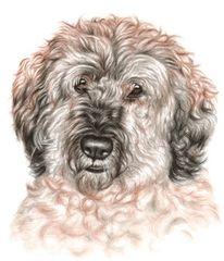 Mischling, Realismus, Portrait, Hund