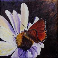 Schmetterling, Stille, Stillleben, Malerei