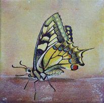 Stillleben, Insekten, Schmetterling, Stille