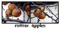Herbst, Winter, Quitten, Apfel
