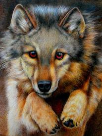 Wolf, Zeichnungen, Konkret