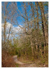 Wald, Outdoor, Blüte, Freiheit