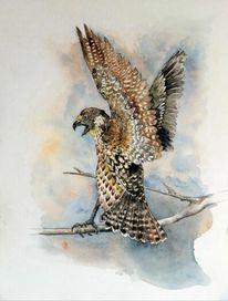 Tierportrait, Aquarellmalerei, Falke, Aquarell