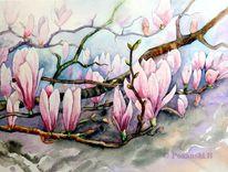 Frühling, Strauch, Blumen, Magnolien
