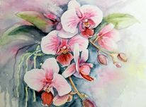 Aquarellmalerei, Blumen, Orchidee, Aquarell