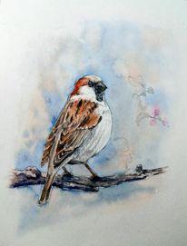 Tiere, Aquarellmalerei, Sperling, Mischtechnik