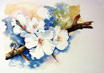 Mandelblüte, Frühling, Reiseskizze, Zypern