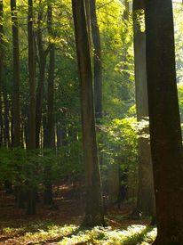 Baum, Wald, Herbst, Sonne