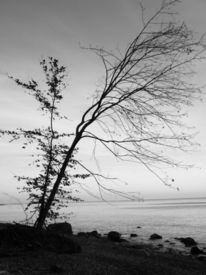 November, Baum, Rügen, Fotografie