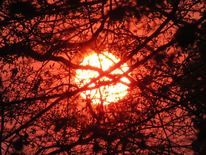 Warm, Winter, Sonnenuntergang, Baum