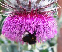 Insekten, Blumen, Frühling, Lila