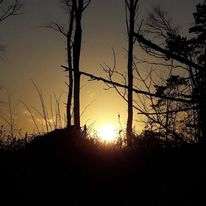 Abend, Sonne, Wald, Baum