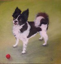 Fell, Hund, Tiere, Tierportrait