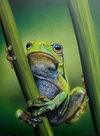 Laubfrosch, Frosch, Malerei