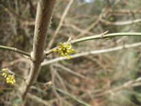 Gelb, Blüte, Frühling, Fotografie