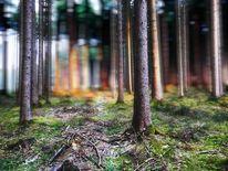 Baum, Leuchten, Sonnenuntergang, Waldweg