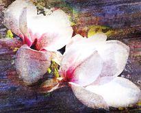 Fotografie, Blüte, Digital, Textur