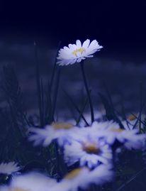 Fotografie, Natur, Fantastisch, Blau