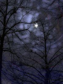 Baum, Winter, Blau, Nacht
