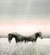 Paar, Unzertrennlich, Pferde, Verwandtschaft