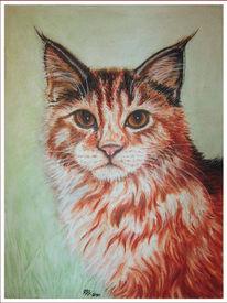Zeichnung, Rot, Katze, Pastellmalerei