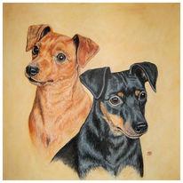 Tiere, Tierportrait, Hund, Portrait