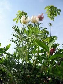 Verlieben, Frühling, Komplimente, Blüte