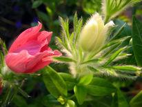 Anerkennung, Frühling, Komplimente, Blüte