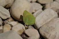 Schmetterling, Blätter, Tierfotografie
