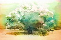 Pflanzen, Baum, Park, Wald