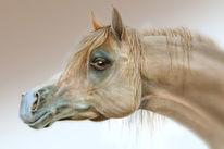 Aquarellmalerei, Pferde, Araber, Turff