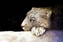 Wildkatze, Savanne, Großkatze, Serengeti