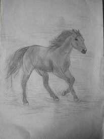 Pferde, Reiten, Zeichnungen, Galopp