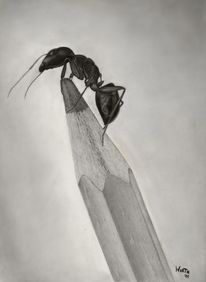 Ameise, Zeichnung, Bleistiftzeichnung, Zeichnungen