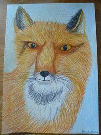 Zeichnung, Fuchs, Buntstiftzeichnung, Zeichnungen