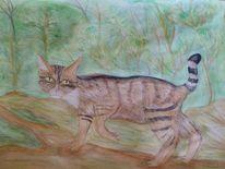 Zeichnung, Aquarellmalerei, Wilkatze, Wildtiere