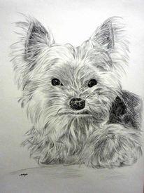 Tierportrait, Portrait, Zeichnung, Hund
