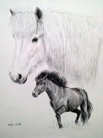Isländer, Pferde, Island, Tierportrait