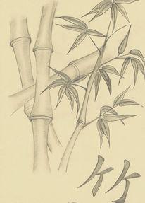 Bleistiftzeichnung, Bambus, Zeichnungen