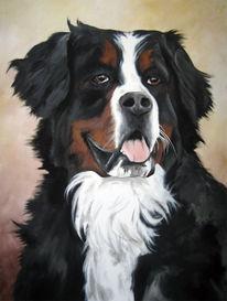 Berner, Sennenhund, Tierportrait, Portrait