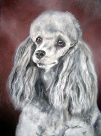 Tierportrait, Hundeportrait, Hund, Pudel