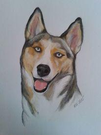 Zeichnungen, Husky,
