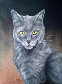 Tierportrait, Pastellmalerei, Katzenportrait, Karthäuser