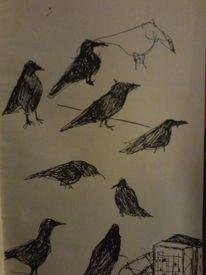 Zeichnung, Tiere, Rabe, Illustrationen