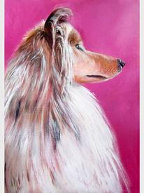 Hund, Dame, Collie, Pink