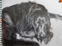 Schlaf, Hund, Schwarz weiß, Skizze