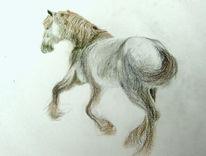 Freiheit, Shirehorse, Zeichnungen