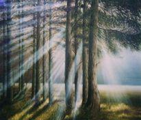 Sonne, Nebel, Baum, Natur