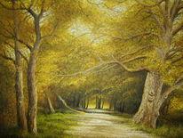 Wald, Weg, Natur, Baum